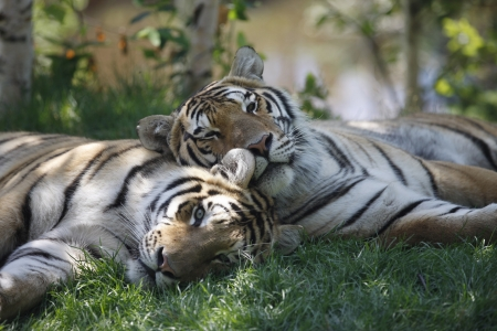 Le Zoo sauvage de Saint-Félicien